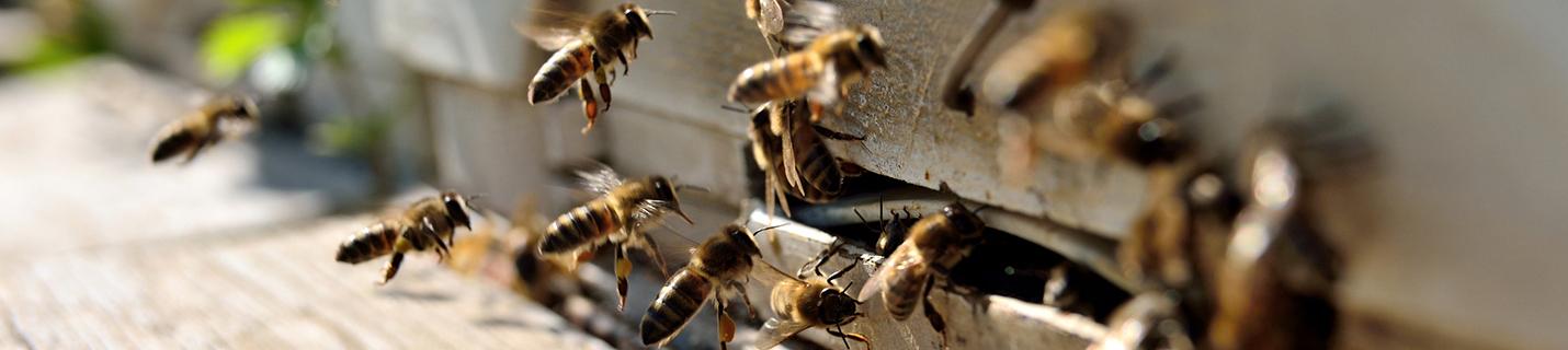 Zielorientiert – Bienenstock